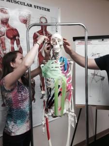 Anatomical study on skeleton - swedish massage versus clinical bodywork